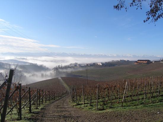 Galleggiando nella nebbia  - Barolo (1728 clic)