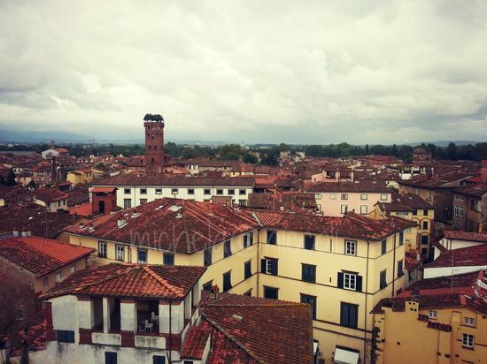 Sulla Torre dell'Orologio - Lucca (1231 clic)