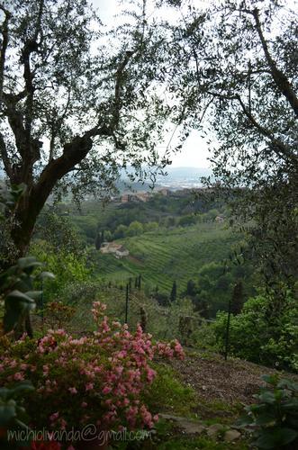 Buggiano - Tuscany Countryside (1153 clic)