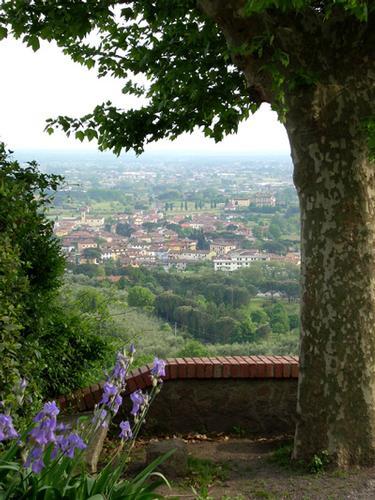 Vista da Buggiano Castello (2323 clic)