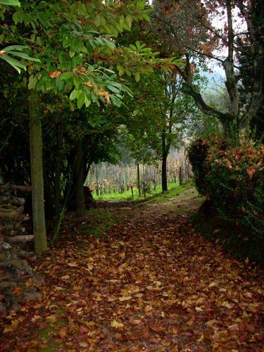L'autunno di Buggiano - BUGGIANO - inserita il 04-Oct-10