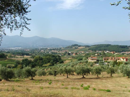 Panorama sulle verdi colline toscane - Lucca (2007 clic)