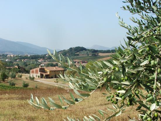 Agriturismo sulle colline lucchesi - Lucca (1975 clic)