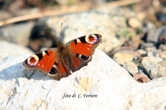 NATURA 2011 - Gazzaniga (1418 clic)