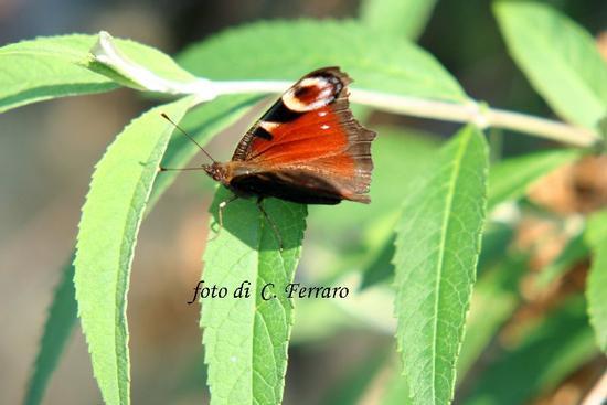 NATURA 2011 - Gazzaniga (1366 clic)