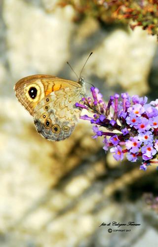 Natura 2017 - Gazzaniga (369 clic)