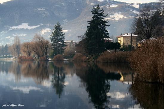 Riflessi sul lago - Spinone al lago (1232 clic)