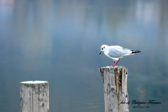 Nel lago di Lovere. (368 clic)