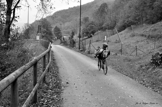 Lungo la pista ciclabile di Gazzaniga (846 clic)