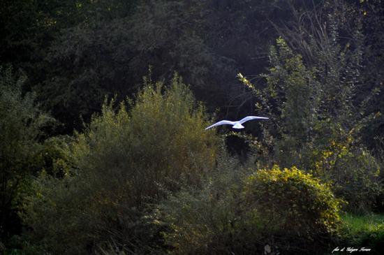 Natura 2014 - Gazzaniga (756 clic)