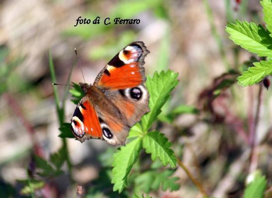 NATURA 2011 - Gazzaniga (1338 clic)