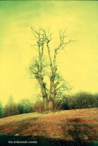 L'albero - Albino (978 clic)
