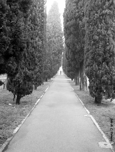 LUNGO IL VIALE - Bergamo (1276 clic)