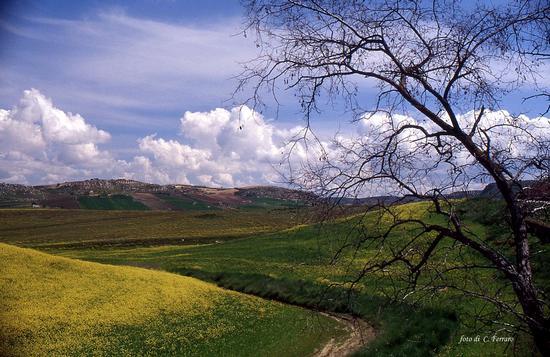 SICILIA  1999 - Riesi (2219 clic)