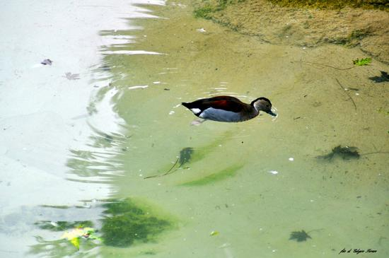 Visitando il parco delle Cornelle - Valbrembo (810 clic)