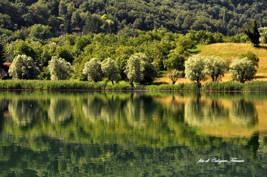 Riflessi sul lago di Spinone - Spinone al lago (5321 clic)