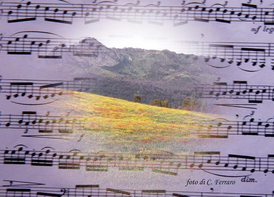 MUSICA E COLORI - Riesi (2413 clic)
