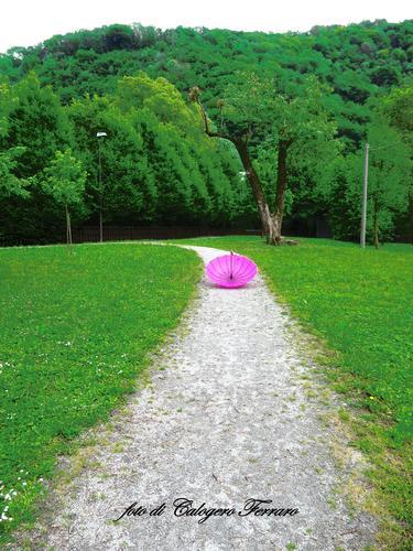 Un'ombrello al parco della Buschina - Gazzaniga (706 clic)