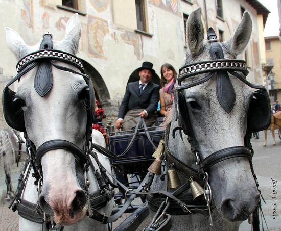 SFILATA DI CAVALLI 2012 A CLUSONE (BG) (1357 clic)