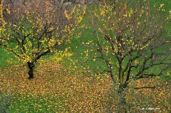 Ultime foglie - Bergamo (1455 clic)