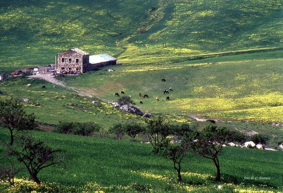 CONTRADA     MILINCIANA - Riesi (4568 clic)