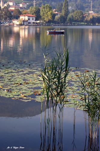 IL LAGO DI SPINONE - Spinone al lago (1166 clic)