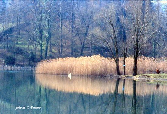 - Spinone al lago (3227 clic)