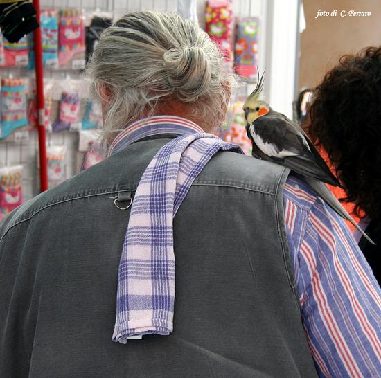 L'UOMO E IL PAPPAGALLO - PONTE NOSSA - inserita il 17-Dec-12