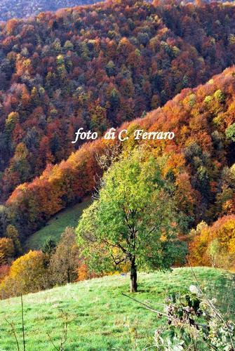 ONETA (BG)    2010      7 - Gazzaniga (1290 clic)