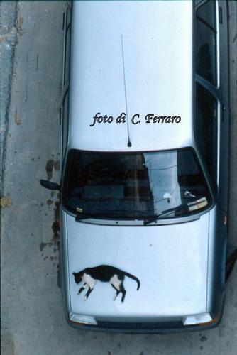 AUTO E GATTO - Riesi (2621 clic)