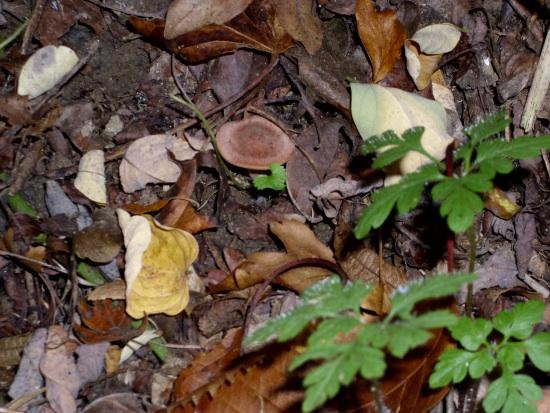 In giro a cercare funghi - Sassello (1317 clic)