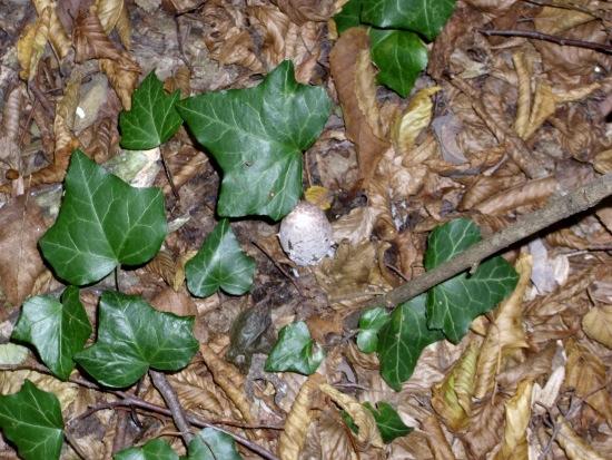 In giro a cercare funghi - Sassello (1716 clic)