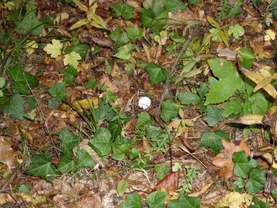 In giro a cercare funghi - Sassello (1795 clic)