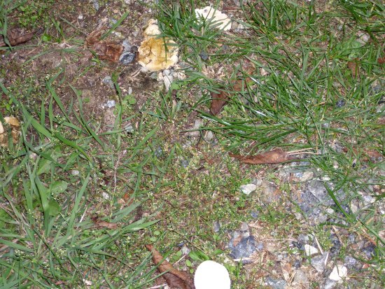 In giro a cercare funghi - Sassello (1366 clic)