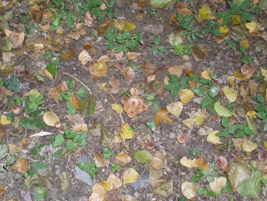 In giro a cercare funghi - Sassello (1582 clic)