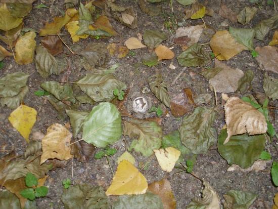 In giro a cercare funghi - SASSELLO - inserita il 17-Oct-10