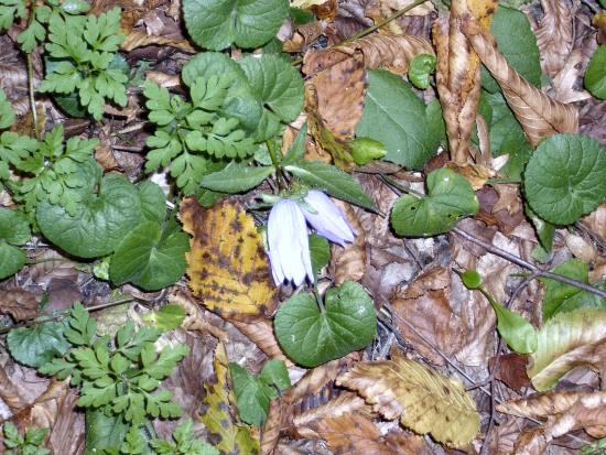 In giro a cercare funghi - Sassello (1256 clic)