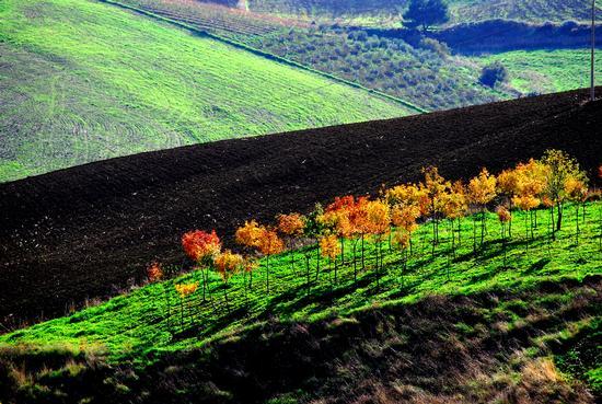 I colori dell'autunno - Caltabellotta (2887 clic)