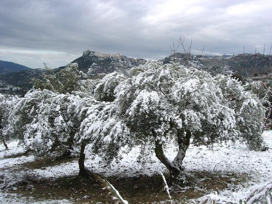E' arrivato l'inverno - Caltabellotta (2844 clic)