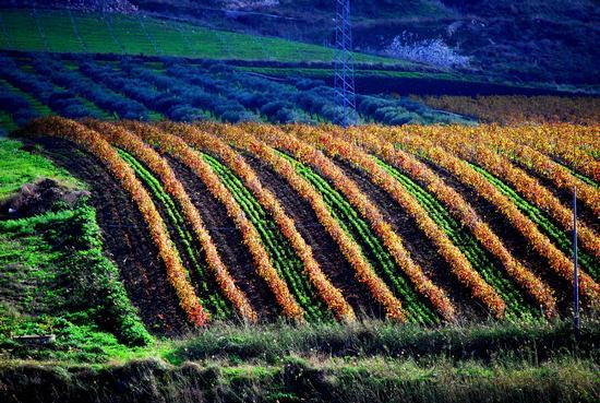 I colori dell'autunno - Caltabellotta (3036 clic)