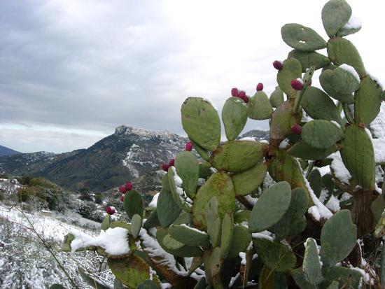 E' arrivato l'inverno - Caltabellotta (2175 clic)