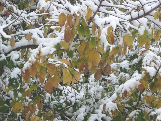 E' arrivato l'inverno - Caltabellotta (2100 clic)