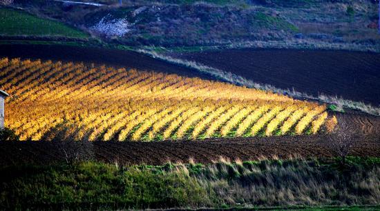 I colori dell'autunno - Caltabellotta (3417 clic)