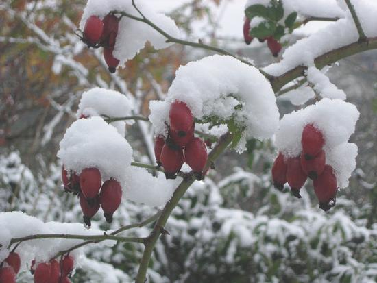 E' arrivato l'inverno - Caltabellotta (2082 clic)