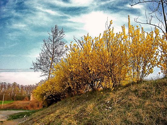 springtime - Lurago d'erba (1616 clic)