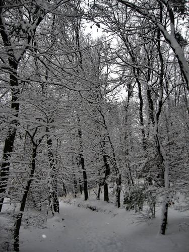 nel bosco - Cantù (1086 clic)