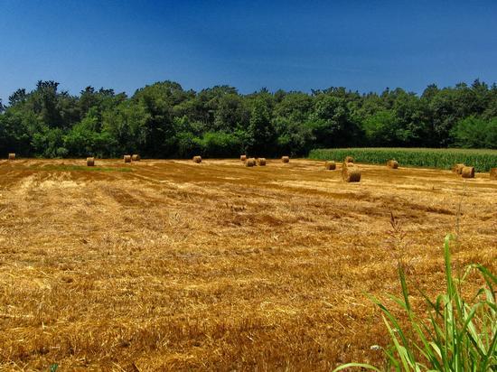 campagna estiva - Cantù (1437 clic)