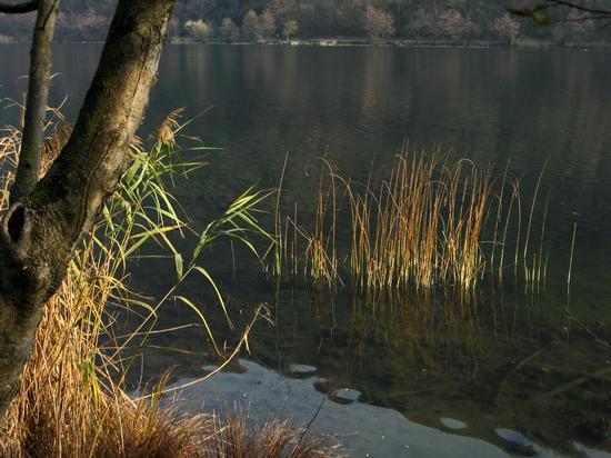 nell'acqua - Longone al segrino (1518 clic)