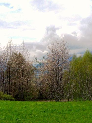primavera - Teglio (1076 clic)