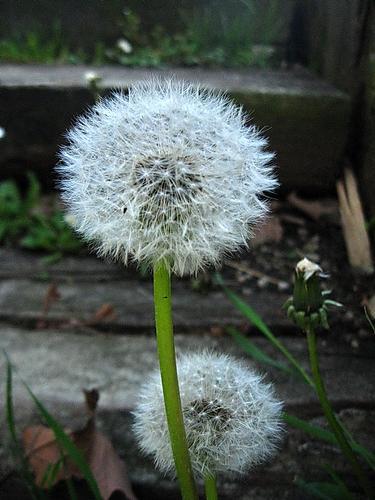 in attesa del vento - ANZANO DEL PARCO - inserita il 17-May-12
